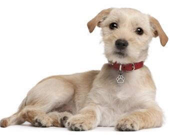 Dog Bling with Dog Paw Print, Dog Paw Print Dog Collar Accessory, Dog Collar Charm, Pet Jewelry, 105