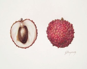 Lychee fruits, original unframed watercolour botanic art painting