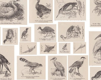 Victorian Birds - 3 Printable PDF Sheets - Vintage Decoupage Paper, Collage/Paper Craft/Card-Making/Mixed Media