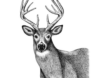 White Tailed Deer, Pen and Ink Print, 5x7, 8x10, 11x14, 13x19, Pen and Ink, Animal Art, Wildlife Art, Home Decor, Kids Art, Hunting, Drawing