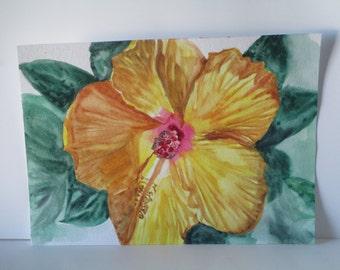 Flowering Yellow Hibiscus full view