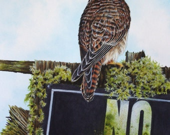 Kestrel and No Hunting Sign - Giclee PRINT of Watercolor painting