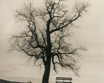 Waiting for the Spring to come.Darkroom silver gelatin print