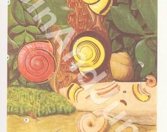 VINTAGE SNAIL PRINT, 1970's Snail Print, Inverterbrates, Garden Animals, Art Deco, Shells, Shell Print, Snail Lithograph, Vintage Red Shells