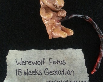 Fetal Werewolf Specimen, Perfect Oddity for a Cabinet of Curiosity! Bizarre Creature, Sideshow Gaff, Preserved Cryptoid Animal, Strange