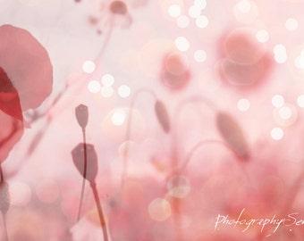 Photography Plant Purity, Nature photo, pastel pink flowers, floral decor, coqueliquot flowers, chic decor, chic Cottage.