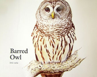 Vintage 1970s Bird Book Print - Barred Owl Illustration - Gifts - Home Decor