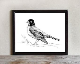 Bird Art Print, Instant Download Printable Art, Robin, Black and White, Bird Drawing, Nature Wall Art, 8x10, 5x7, 4x6