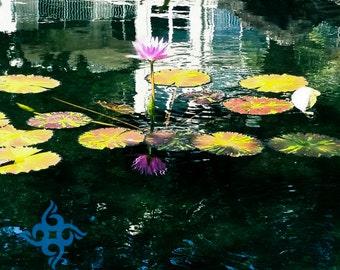 Lotus Pond 1