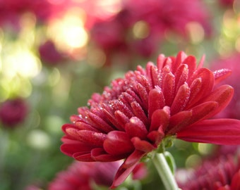 Flower Beautiful In Red Photograph #242