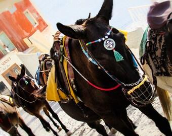 Donkeys of Santorini