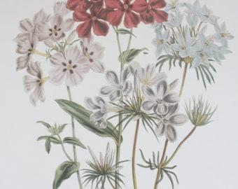 Vintage Botanical Print English Country Style Garden
