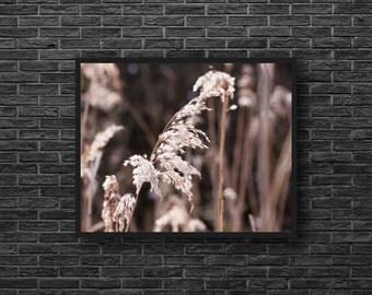 Grasses Photography - Field Grasses Photo - Botanic Photography - Fields Photo - Nature Photo Print - Nature Wall Decor - Botanic Wall Art