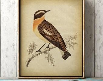 Lovely bird print, bird poster, ornithology, songbird, bird illustration, bird wall decor, bird art, warbler