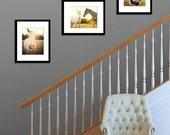 horse photography collection gift set rustic home decor farmhouse photography horse nursery art yellow home decor animal photographs