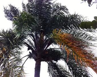 Palm Tree digital download free use