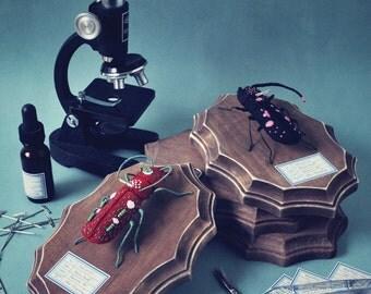 Print: Bicorn Beetles - bug insect specimen felt plush photo wall decor digital toy retro biology science art