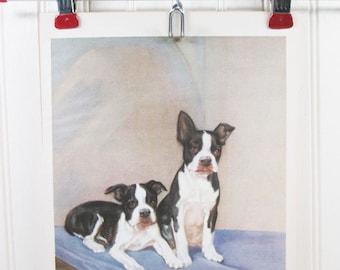Vintage Dog Print Boston Bulldog Diana Thorne Color Illustration Book Plate