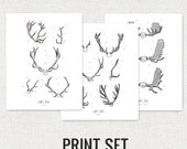 Antler Study Print set / 3 prints - Scientific illustrations. Textured cotton canvas art print. Order as an 8x10 11x14 or 16x20 size.