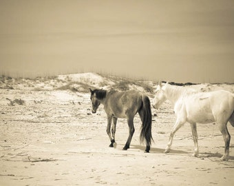 Horses on the beach . Cumberland Island . travel photography . wild horse print . equine art . black and white photograph . seashore print