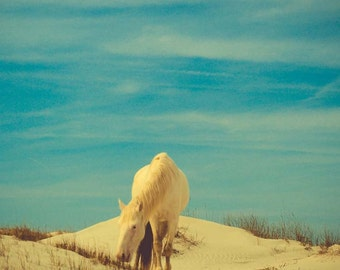 Wild horse photograph . Cumberland Island . blue white tan . beach art . horse photograph . travel photo . retro photography . seashore