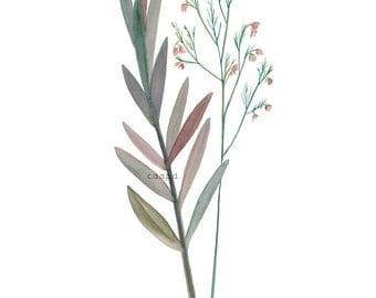 Wallflowers 1 - Watercolor Art Print - 8x10 - garden, botanical, plants, flowers