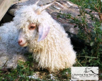 White Mohair First Cut Baby Angora Goat Mohair First Hair Cut Fiber Raw Mohair Spinning Fiber Fur Hair Unwashed White Cruelty Free 1 Ounce