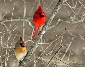 Male and female Northern Cardinal Notecard