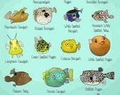 Puffers of the World 11x17