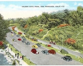Vintage California Postcard - Golden Gate Park, San Francisco (Unused)