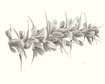 Desert Ocotillo in Leaf Pencil Drawing Print
