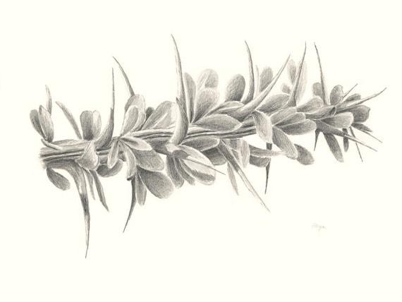 Desert Ocotillo in Leaf Pencil Drawing 8x10 Print