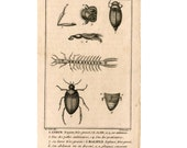 1775 BEETLES INSECTS original antique engraving buffon bug print - plate 149