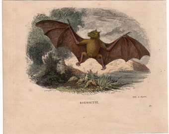 1860 BAT FLYING print original antique hand colored chiroptera engraving - ROUSSETTE BATs