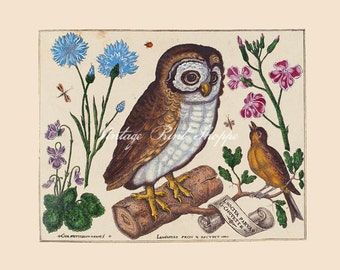 French Botanical Owl Print Vintage Scientific Illustration Reproduction 5x7 Art Naturalist Art Home Decor Living Room