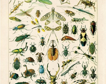 Insects / Animal Kingdom