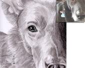 2 Tier Portraits nach Ihrer Fotovorlage Bleistift DIN A4