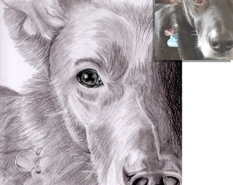 Custom pencil drawn portrait of your pet according to your photograph DIN A4