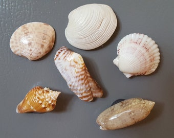 Seashell Magnets, Set of Six, Reminders of Warmer Places and Beach Vacations, kitchen Magnets, Office Decor