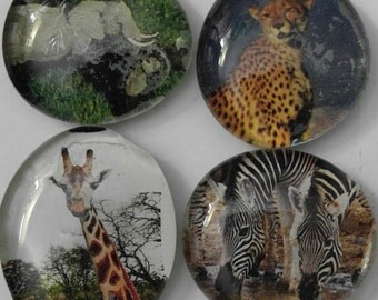 Set of 4 Unique African Animals Glass Marble Magnets
