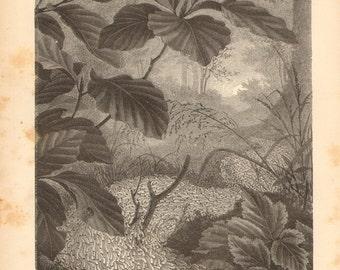 1877 Armyworm Infestation Original Antique Engraving to Frame