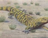 Gila Monster of Arizona- 1910s Antique Postcard- Giant Lizard- H H Tammen- Souvenir Card- Southwest Decor- Paper Ephemera- Unused