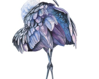 Sandhill Crane print of watercolour painting, A3 size largest print. S8916, Sandhill Crane watercolour painting print
