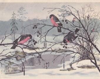 "Postcard Drawing by O. Khodatayeva ""Bullfinches"" -- 1959. Condition 8/10"