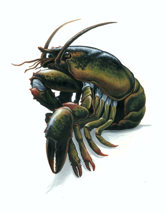 consider the lobster Food-minded folk may already be familiar with his essay consider the lobster,  originally published in gourmet magazine in 2004 if you're not.