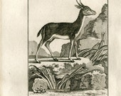 Bushbuck 1811 Antique Print Le Bitbok, Authentic 200 Years Old Copper Engraving, Buffon African Animal