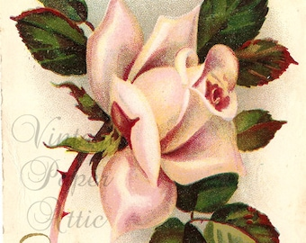Shabby Pink Rose Antique French Postcard, Chromolithograph Post Card from Vintage Paper Attic