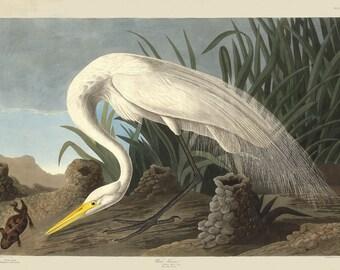 John James Audubon Reproductions - White Heron, 1837. Fine Art Print.