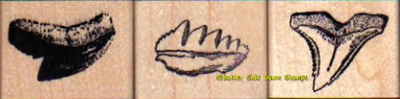 3 Fossil Shark Teeth Rubber Stamp Set 1: Tiger, Cow Shark, Hemipristis