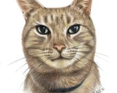 CUSTOM Sketched Pet Portrait with matching Card & Gift Tag, Cat Portraits, Dog Portraits, Pet Portraits, Animal lover gift, Pet illustration